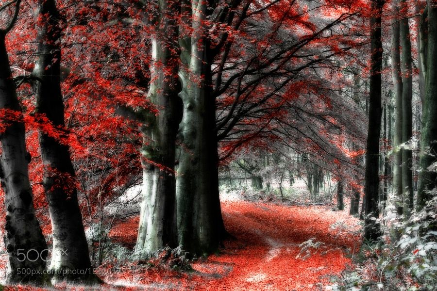 The forest is ready for helloween by Vollemaan. @go4fotos