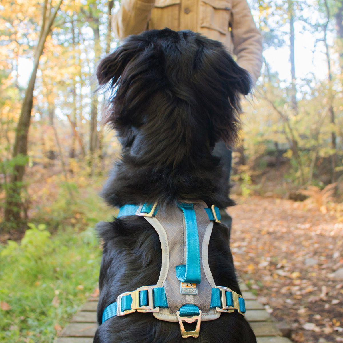 45 Kurgo Journey Dog Harness Blue And Charcoal Dog Harness