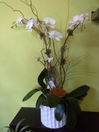 Natural Orchids Boutique Orchid Arrangements Orchids Flower Delivery