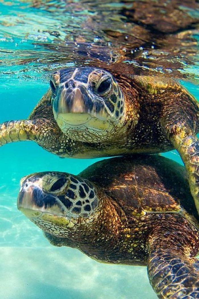 Créatures uniques qui habitent le fond marin - Archzine.fr
