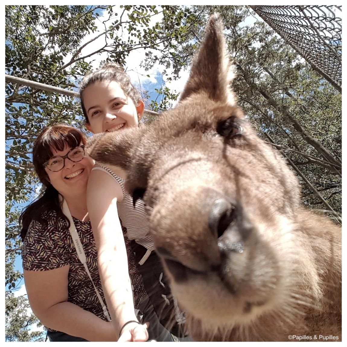 Kangourou Photo Bombing Brisbane Australie Animals Brisbane