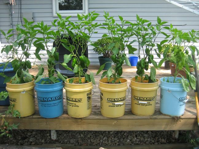 This is what i want to try 5 gallon bucket gardening for Gardening 5 gallon bucket