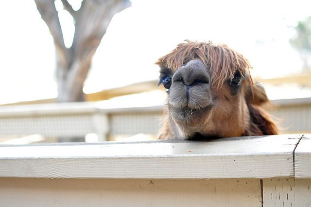 Zoomars Petting Zoo At San Juan Capistrano Party Time Pinterest