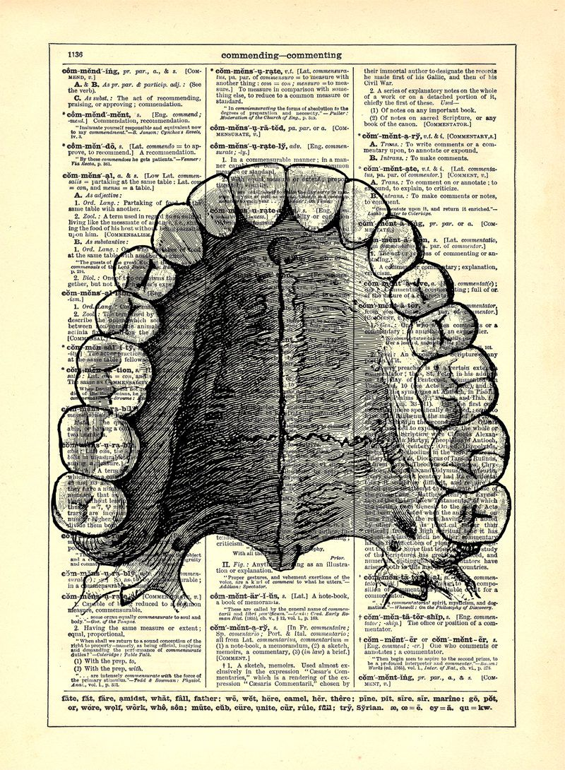 Dental Anatomy Teeth, Home, Kitchen, Nursery, Bath, Office Decor ...