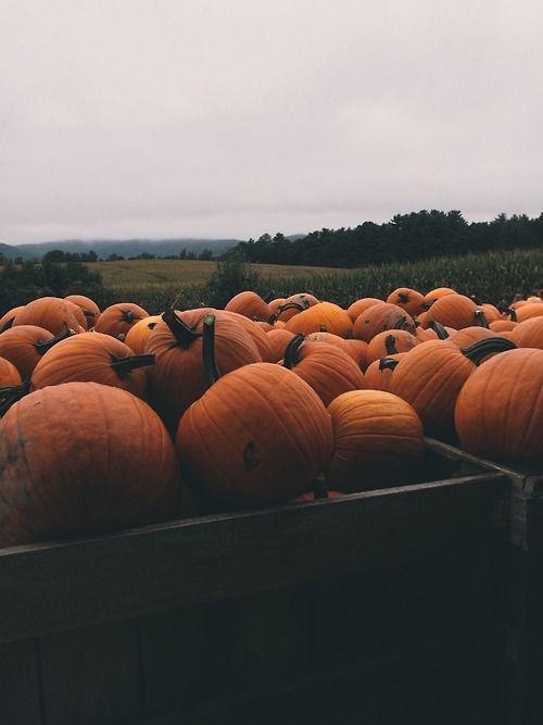 Kateoplis Morning The Real Thing Fall Wallpaper Iphone Wallpaper Fall Pumpkin Wallpaper