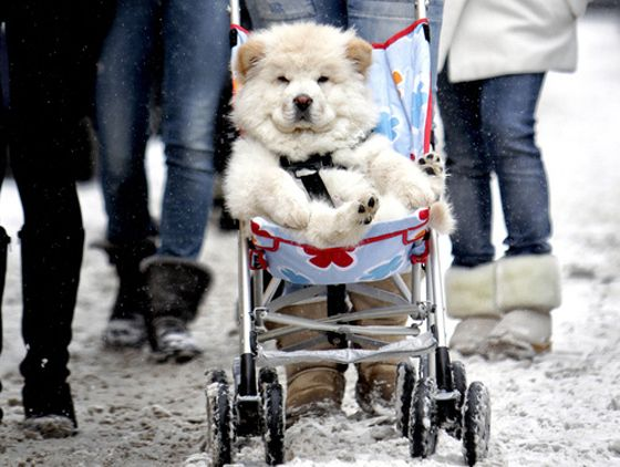 http://cuteoverload.com/ I want to pin every cute little thing every time I visit this site!  :)