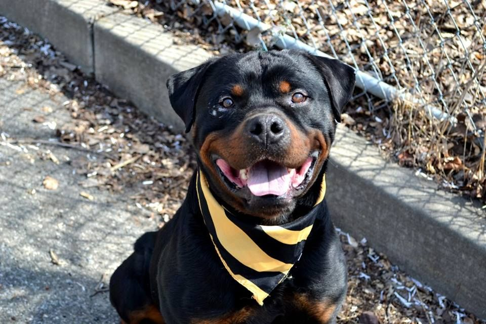 Staten Island Center Tundra A1031153 Male Black Brown