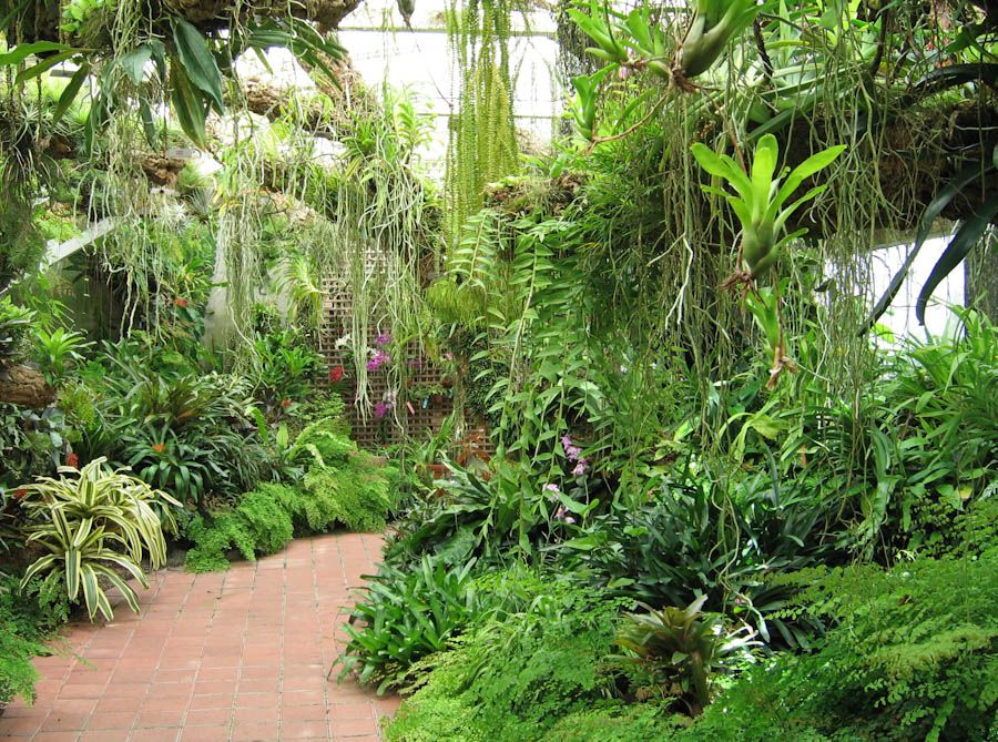 Tropical gardens tropical flowering plants fairchild for Tropical plants landscaping ideas