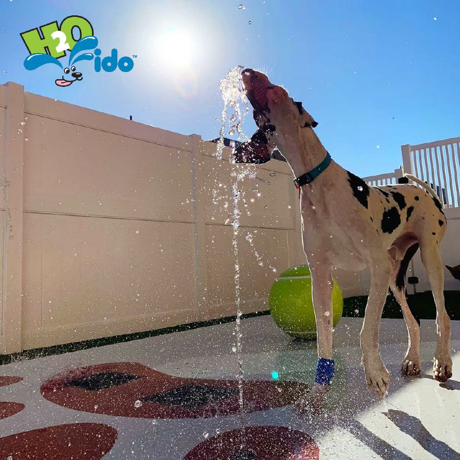 Want To Draw A Crowd Our Miniature Water Parks For Dogs Are A Hit
