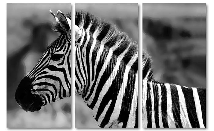 Canvas doek zebra zwart wit drieluik foto schilderijen dieren op canvas doek zebra zwart wit drieluik foto schilderijen dieren op canvas pinterest thecheapjerseys Gallery