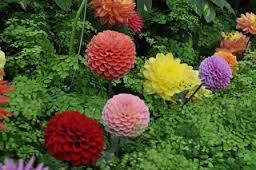 Image Result For Beautiful Flower Gardens Waterfalls