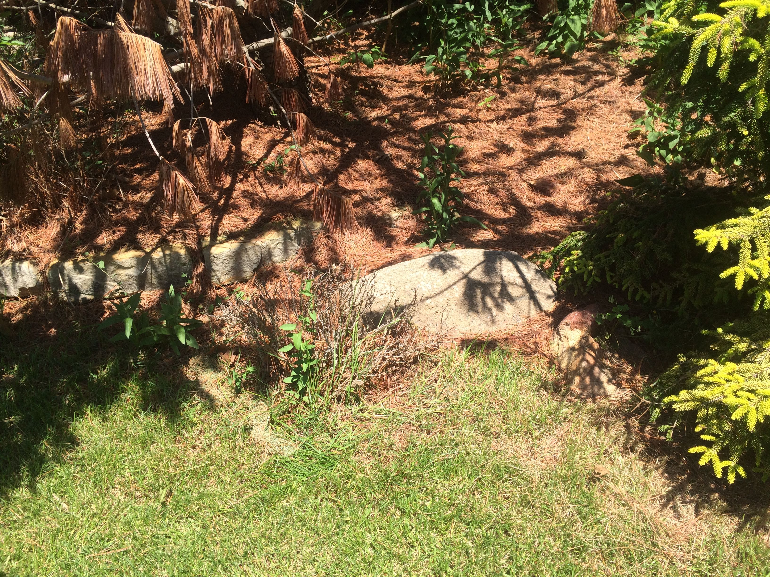 I Plied Line Along The Edge Of The Garden Bed.