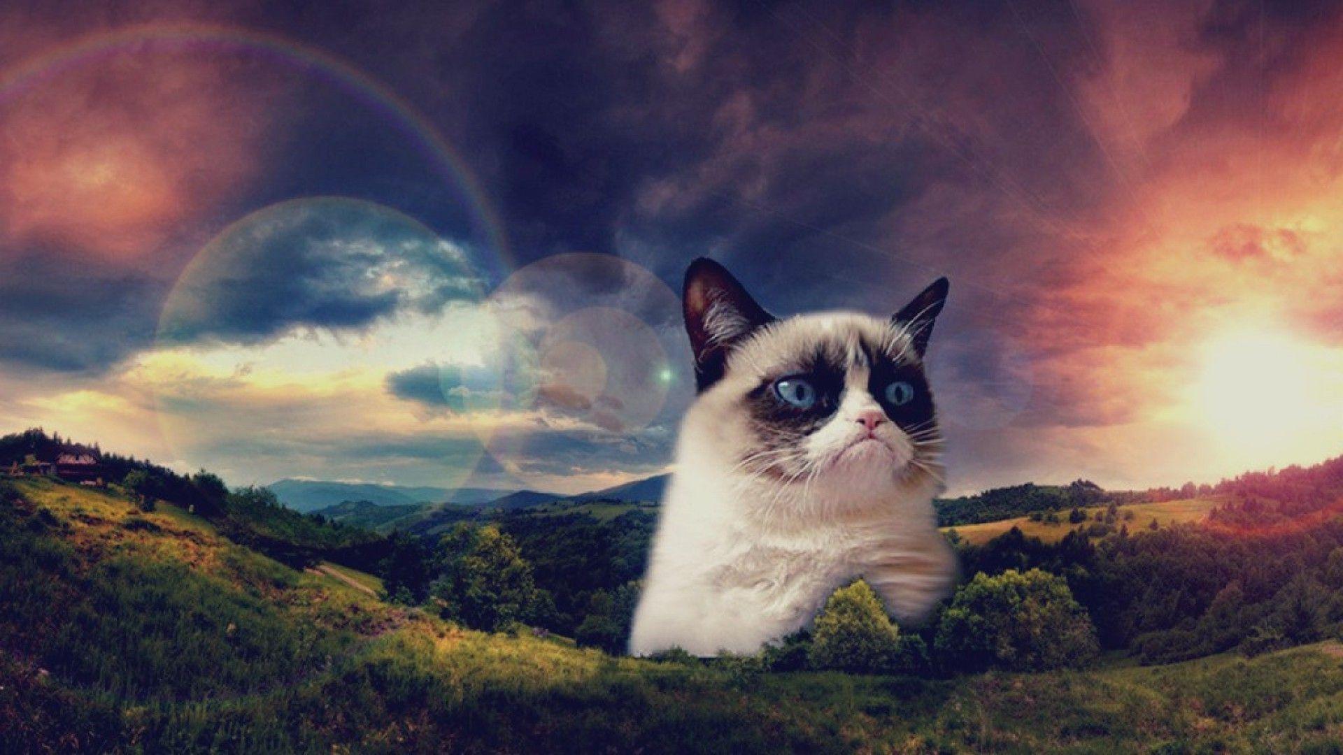 Space Cat Wallpaper High Resolution For Desktop Wallpaper