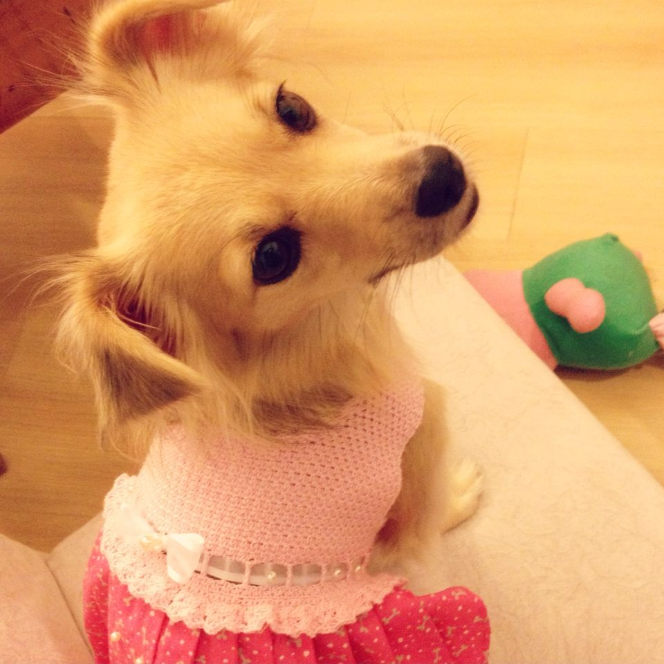 Dress pet crochet | MASCOTAS A LA MODA | Pinterest | Mascotas