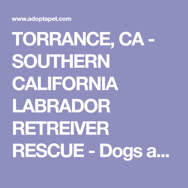 Torrance Ca Southern California Labrador Retreiver Rescue Dogs And Puppies For Adoption Labrador Retriever Rescue Labrador Dog Puppy Adoption