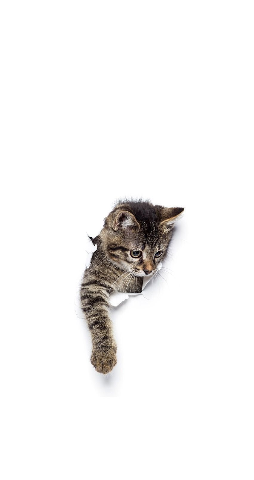 Untitled Iphone Wallpaper Cat Cute Cat Wallpaper Cute Cats