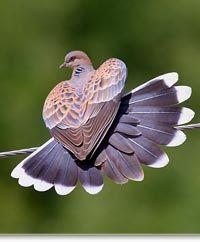 Angel Wings Making A Heart