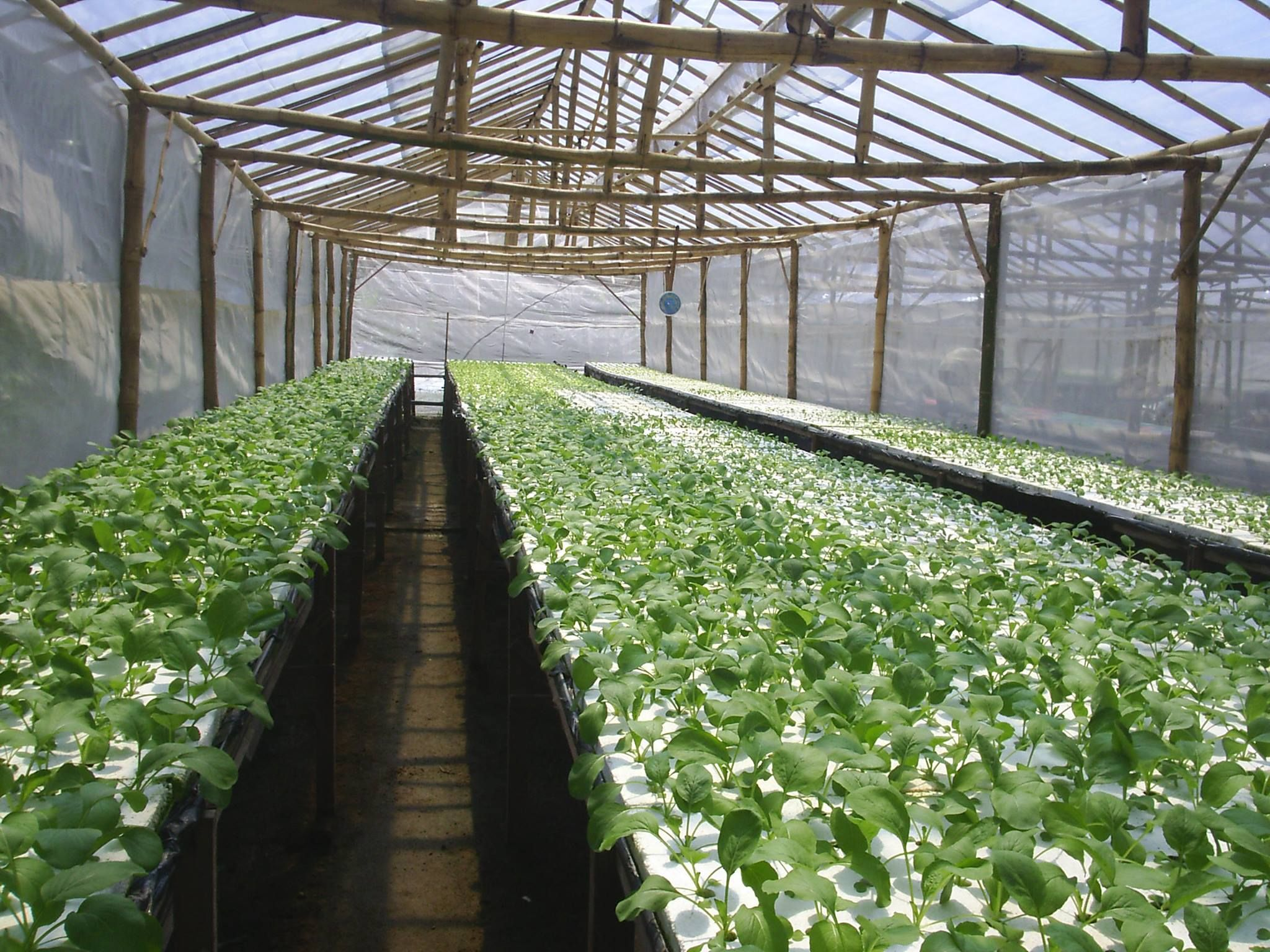 A hydroponics system shared from our facebook friend rifai for Hydro gardens