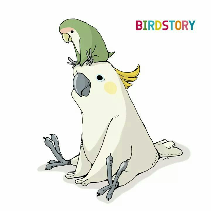 How Cute With Images Parrots Art Bird Drawings Cute Drawings