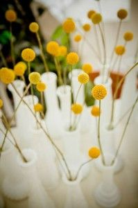 Billy button flowers wedding ideas pinterest wedding bridal craspedia billy balls yellow flower want a couple this flower in small white vases on each table mightylinksfo