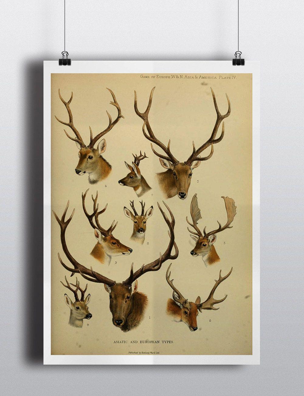 Antique Deer Elk Antlers Scientific Chart Poster Print Deer Head ...