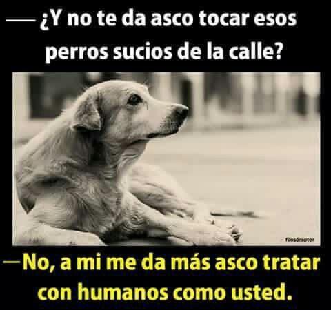 Pin De Mari Aq En Mi Mejor Amigo Perros Frases Perros Animales Frases