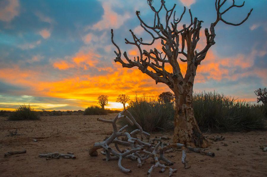 Mooie zonsopkomst boven de Kalahariwoestijn, Namibië.