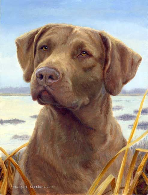 Favored A Limited Edition Chesapeake Bay Retriever Print Duck