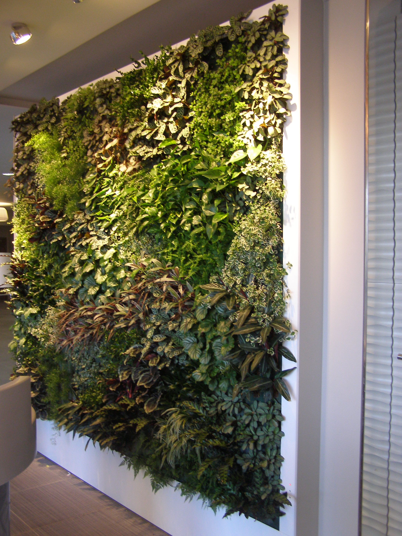 Livepanel Verticale Tuin Tuin Ideeen Planten