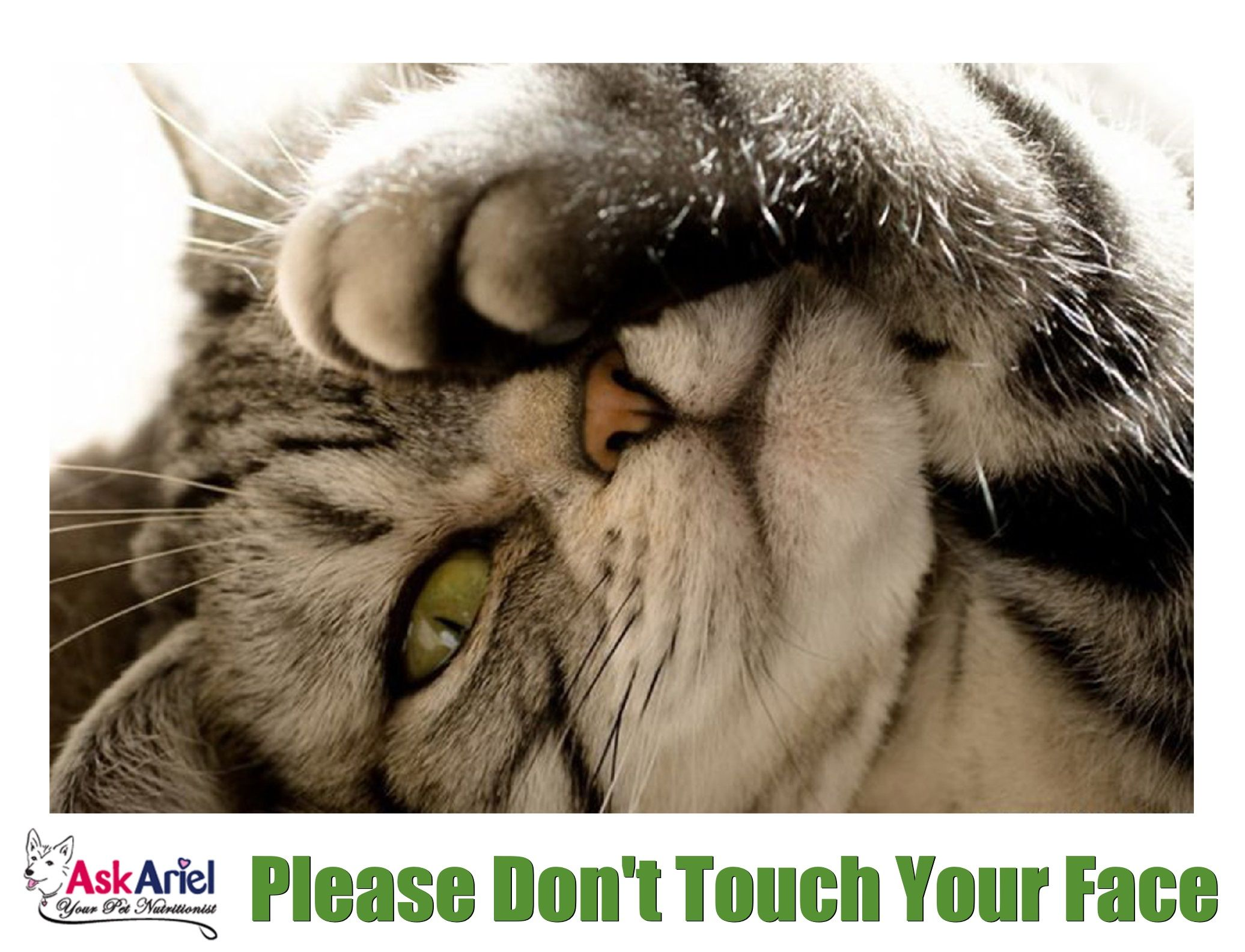 Please Don T Touch Your Face In 2020 Holistic Pet Pet Supplements Animal Nutrition