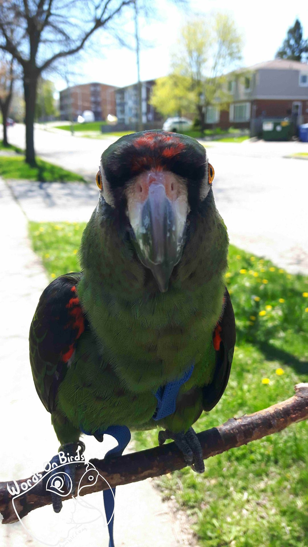 Image Dax The Jardines Parrot Staring Directly At The Camera He