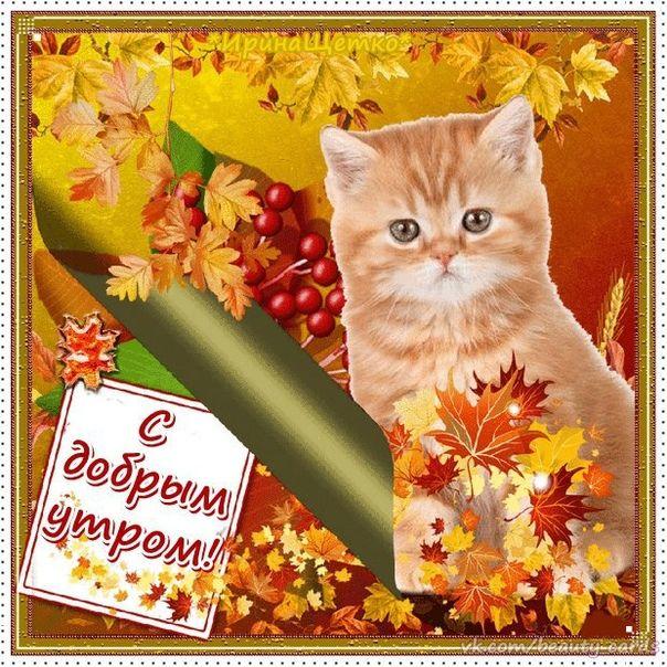 Смешные, осенний приветик картинки с кошками