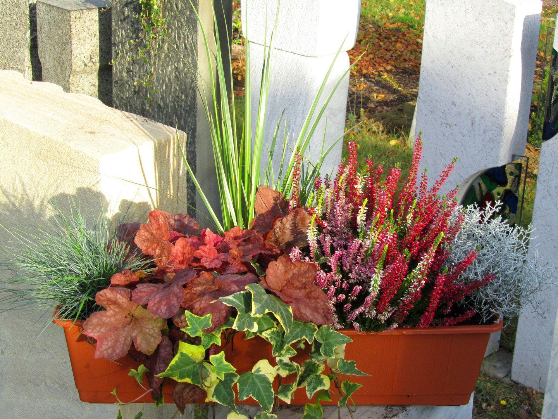 Bepflanzter Balkonkasten 60 Cm Wintergrun Im Bewasserungskasten