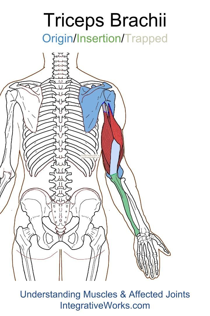 Trigger Points – Vague pain in the back of the shoulder and arm ...