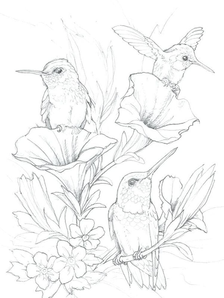 Hummingbird Coloring Book Pages Hummingbirds Are Tiny Birds That Are Good At Flying And Are One Of The Mo Hummingbird Drawing Bird Drawings Hummingbird Sketch