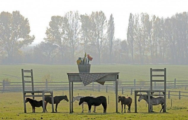 Horses stand in the shadows of a gigantic wooden table and two chairs in a meadow near Doellstaedt, central Germany.