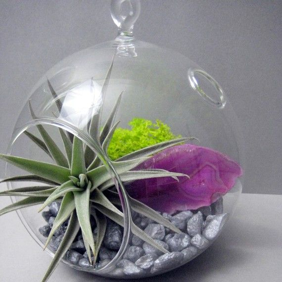 Pink Agate Slice Air Plant Terrarium Doesn T Need Soil