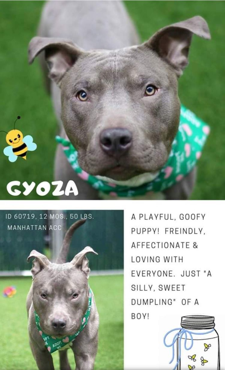 Precious Innocent Gyoza Listed To Die 4 30 19 At The High Kill Center Nyc Acc Ij2 Nyc Dogs Dog Pounds Dogs Online
