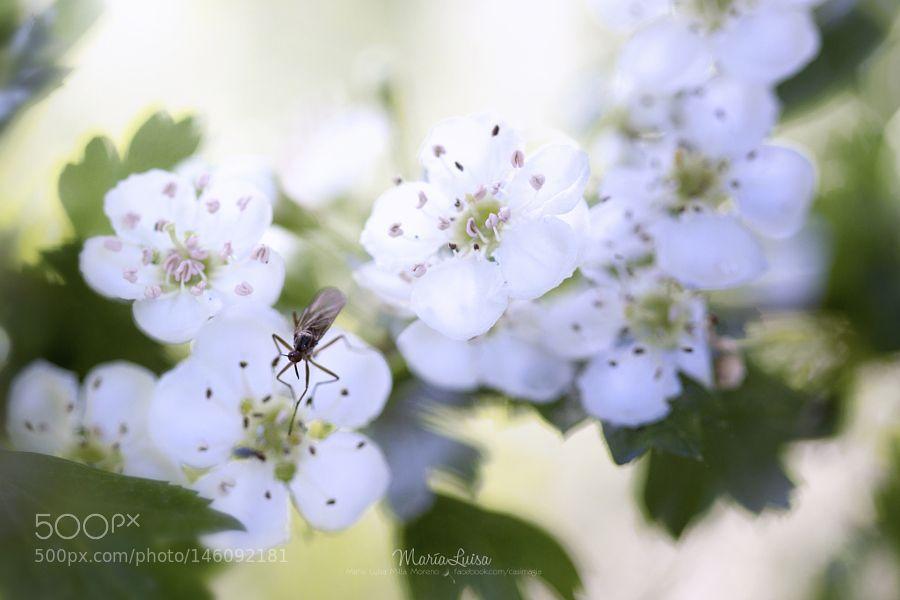 Spring dream by azulsiena. @go4fotos