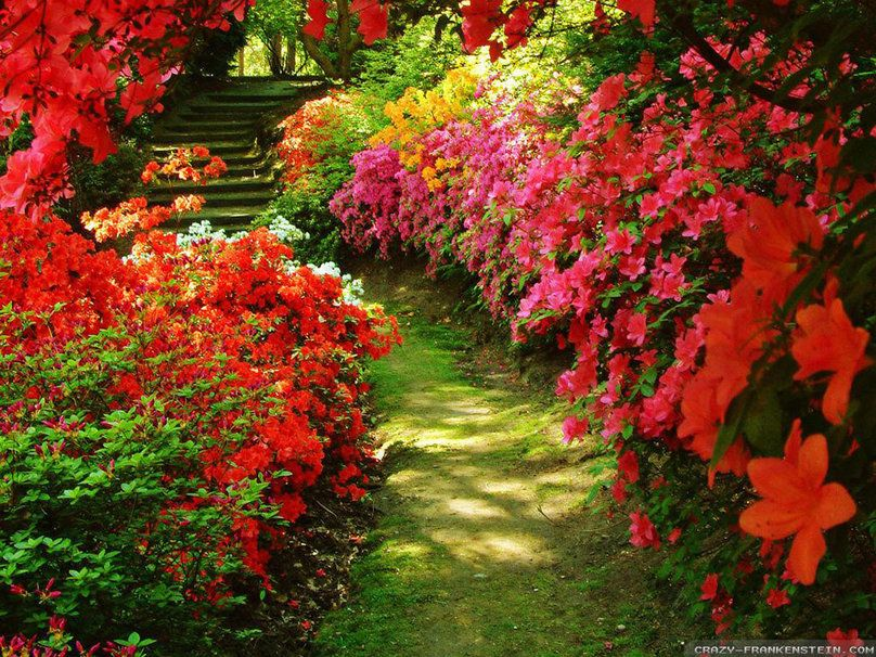 rosas vermelhas jardim - Pesquisa Google Gardens ...