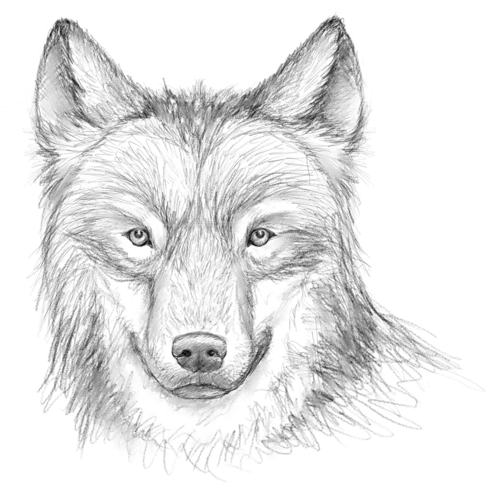 Dessin loup cr ation animaux 2 pinterest dessin loup - Loup a dessiner ...
