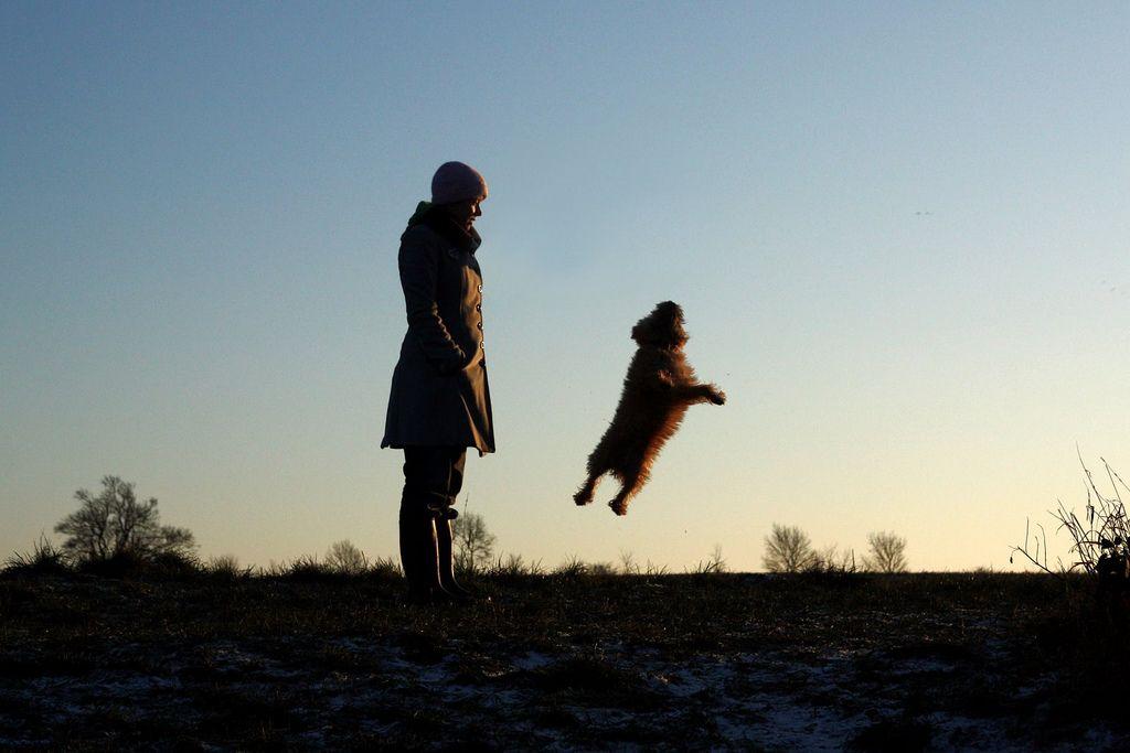 Cairn terrier joy!