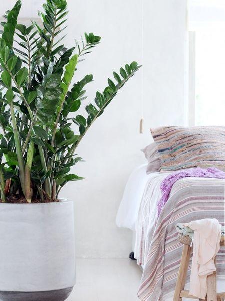 Wunderbar ins Schlafzimmer passen zum Beispiel die Pflanzen ...