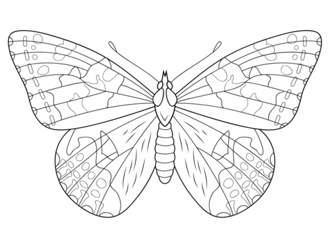 Painted Lady Butterfly coloring page from Butterfly