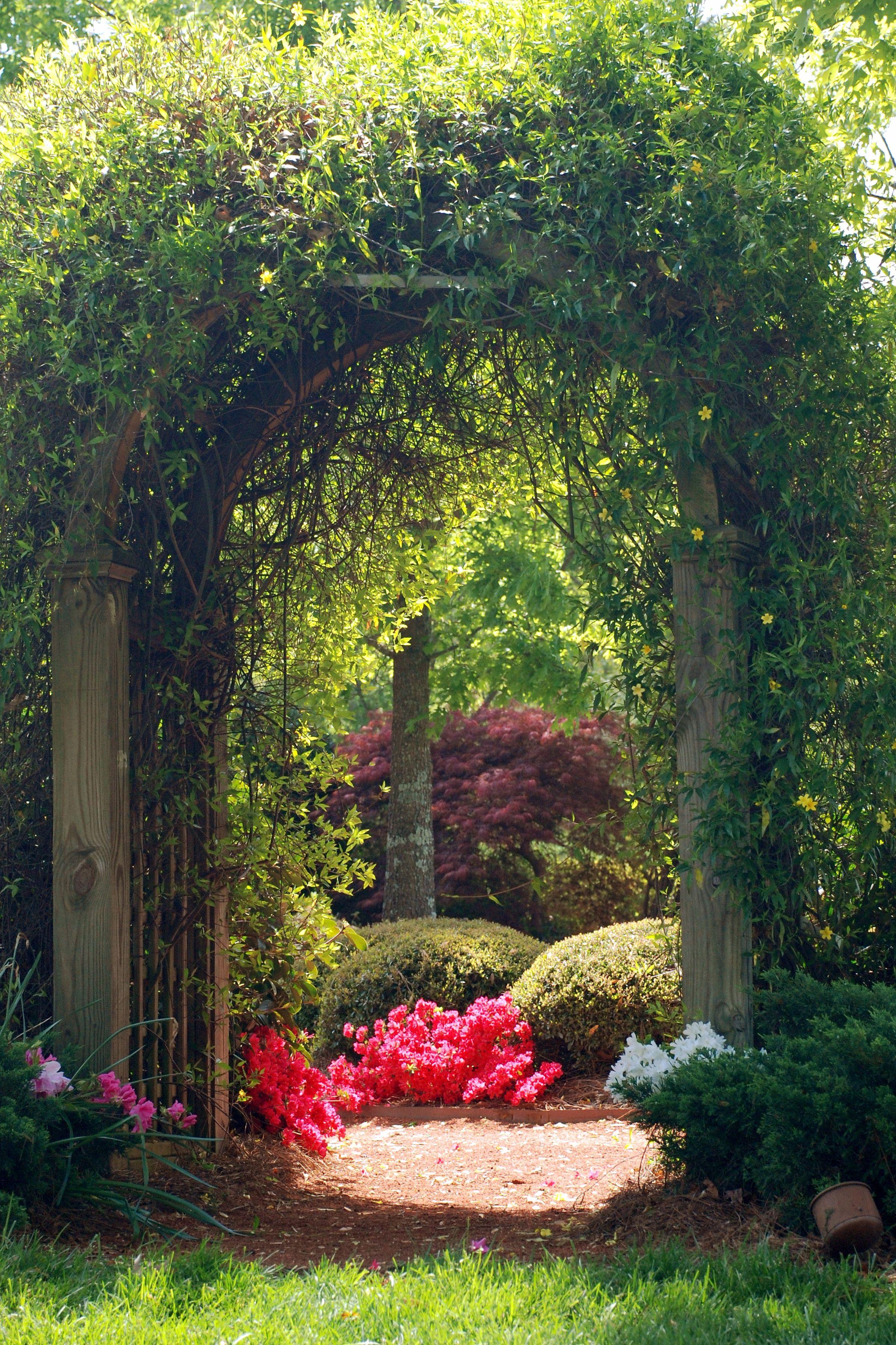 My Secret Garden: Arbor Covered In Carolina Jessamine Vine Leading In To A