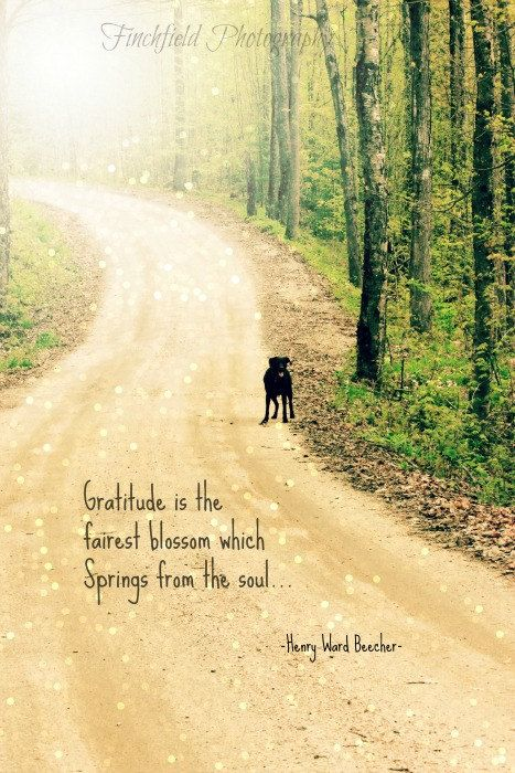 Gratitude Nature Photography Famous Quote Summer By Finchfieldart