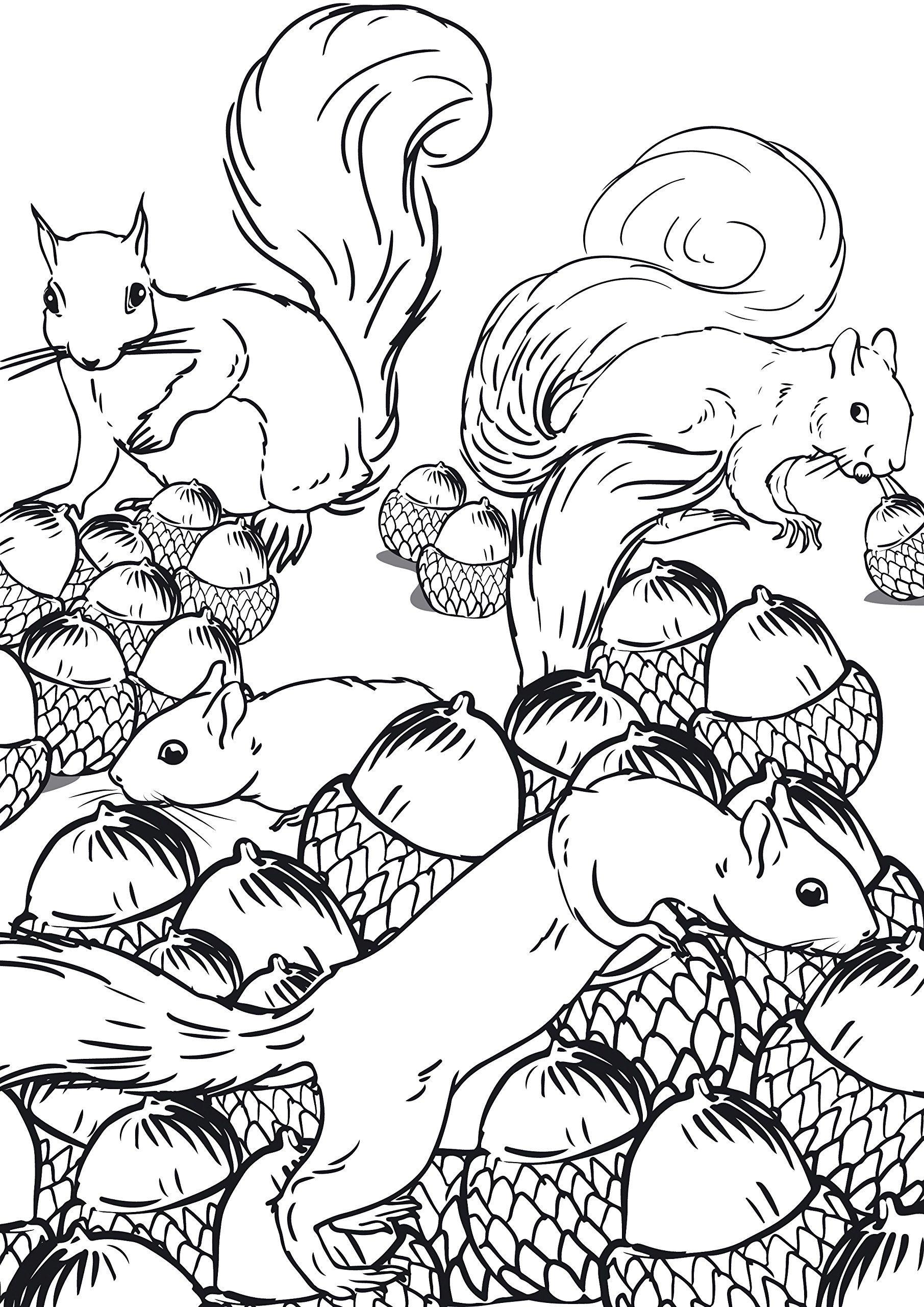 Petites Betes Et Grosses Bestioles 100 Coloriages Creatifs Amazon De Marthe Mulkey Fremdsprachige Bucher Colouring Pages Zentangle Drawings Coloring Pages