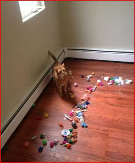 Moved couch to clean, found all the cat's toys.