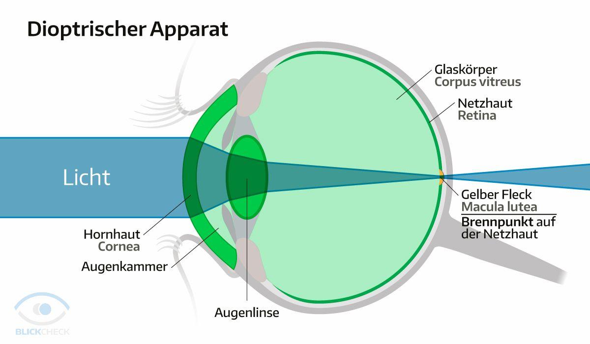 Der Dioptrische Apparat. | Anatomie und Physiologie des Auges ...