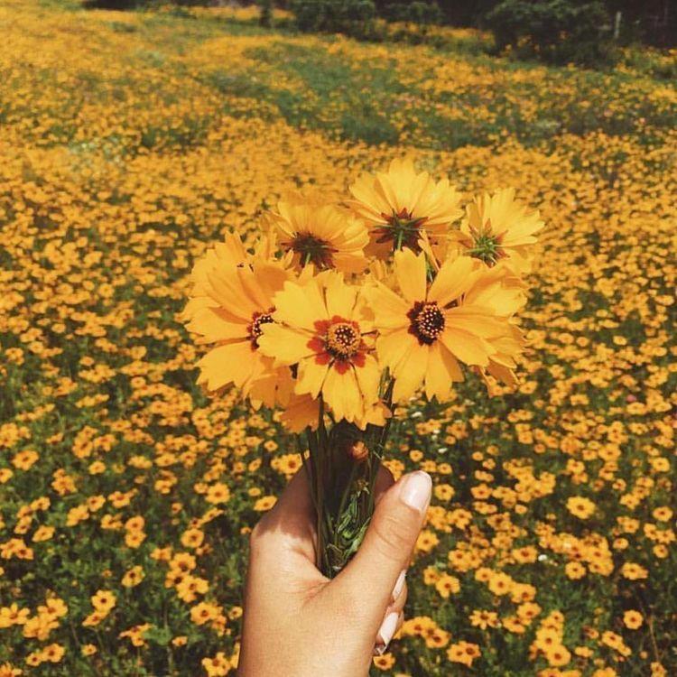 SUMMER ( AESTHETICS ) i. SUNSHINE Yellow theme, Flower